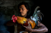 Balinese Cock Fighters